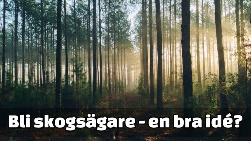 Äga skog - trädfällning