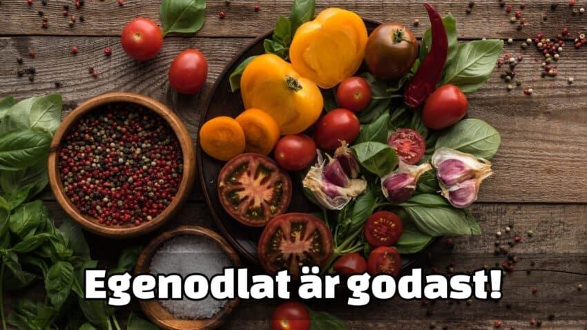 Egenodlade grönsaker smakar bäst
